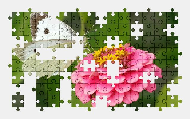 free jigsaw puzzle online butterfly,flower,pink,white,nature