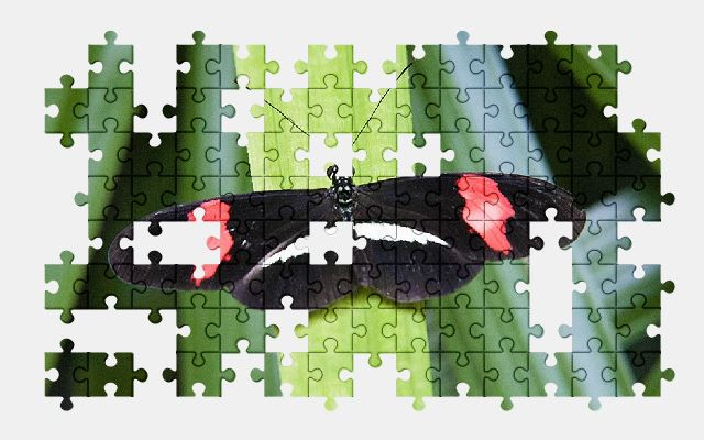free jigsaw puzzle online butterfly,nature,animal