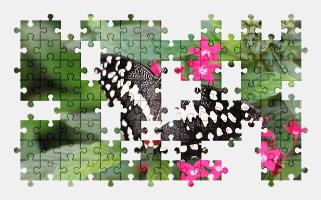 free jigsaw puzzle online butterfly,insect,tropical,animal,nature