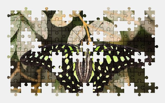 free jigsaw puzzle online butterfly,insect,tropical,nature