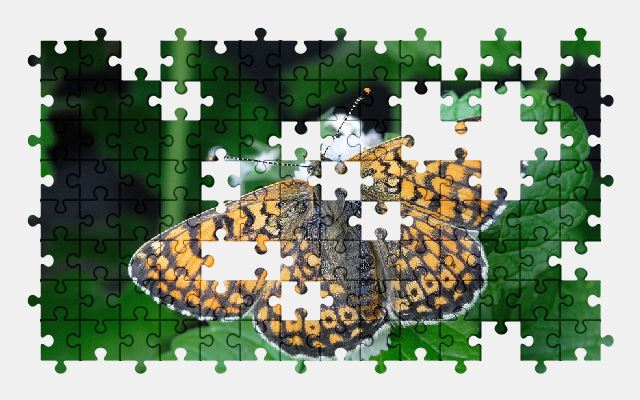 free jigsaw puzzle online butterfly,insect,nature,plant,animal
