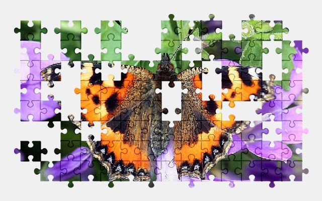 free jigsaw puzzle online butterfly,insect,nature,wildlife,spring,animal