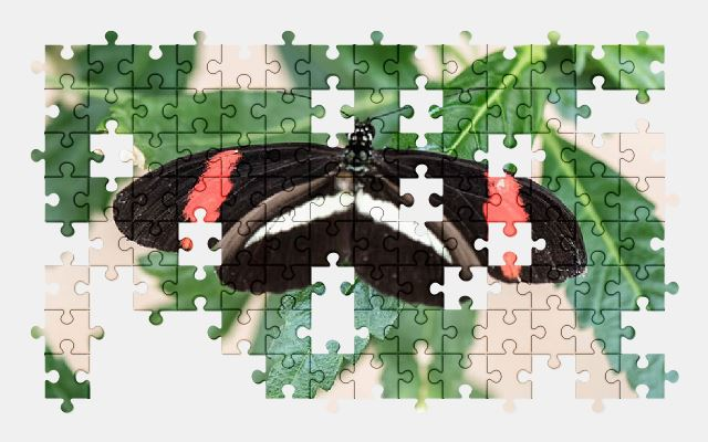 free jigsaw puzzle online butterfly,macro,pose,plant,green