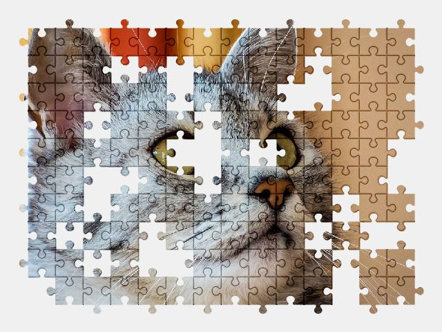free jigsaw puzzle online cat,animal,pet,cute
