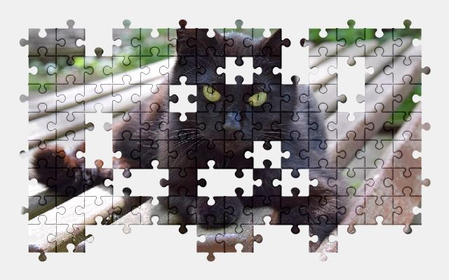 free jigsaw puzzle online cat,animal