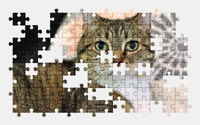 free jigsaw puzzle online cat,pet,animal
