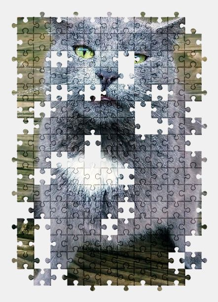 free jigsaw puzzle online cat,funny,animal,cute,pet