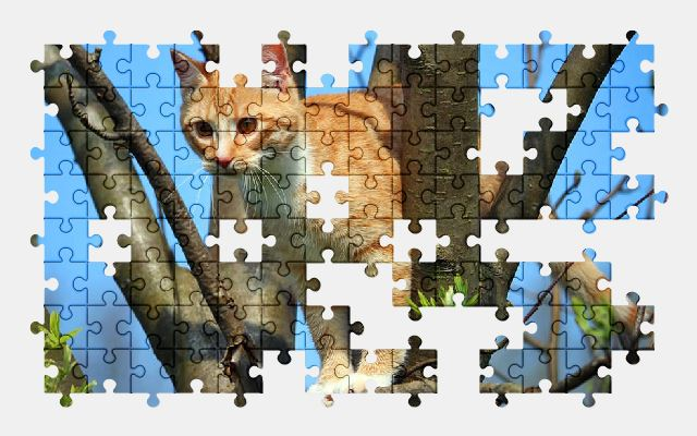 free jigsaw puzzle online cat,kitten,animal