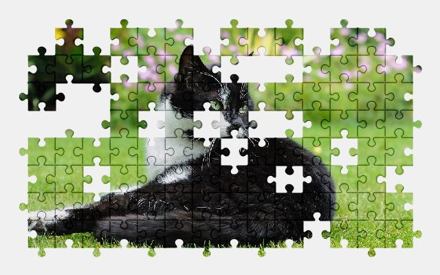 free jigsaw puzzle online cat,grass,animal