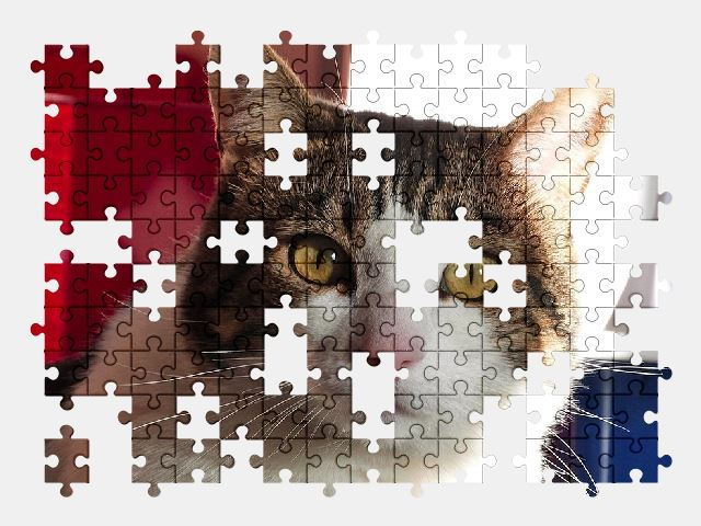 free jigsaw puzzle online cat,cute,pet,kitty