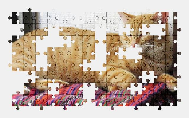 free jigsaw puzzle online cat,animal,pet