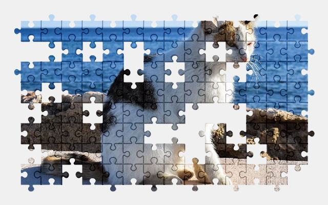 free jigsaw puzzle online cat,animal,cute,kitty,adorable