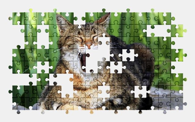 free jigsaw puzzle online cat,cute,animal,pet