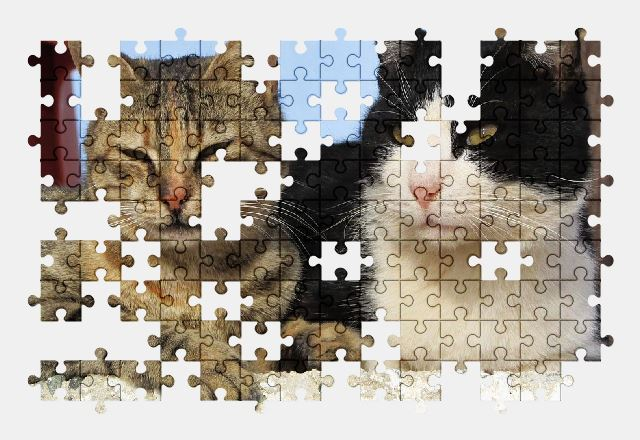 free jigsaw puzzle online cat,relax,pet,animal