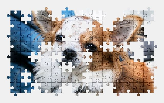 free jigsaw puzzle online chihuahua,dog,animal,pet,adorable