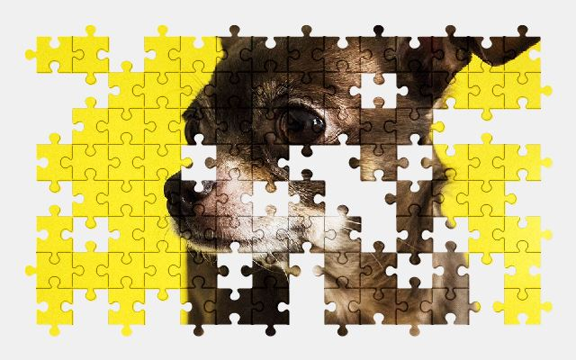 free jigsaw puzzle online chihuahua,dog,animal,pet,puppy