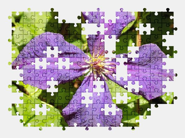 free jigsaw puzzle online clematis,violet,flower