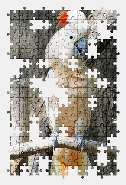 free jigsaw puzzle online animal,bird