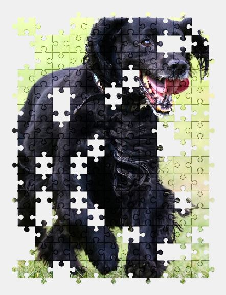 free jigsaw puzzle online dog,spaniel,pet,animal
