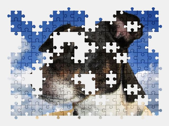 free jigsaw puzzle online dog,animal,adorable,pet