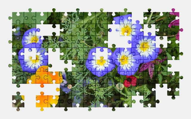 free jigsaw puzzle online colorful,flower,beautiful,summer,nature