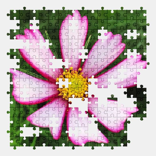 free jigsaw puzzle online autumn,flower,nature,plant,cosmos