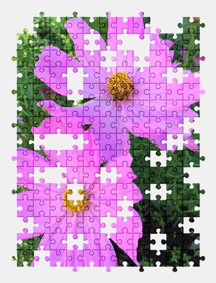 free jigsaw puzzle online cosmos,flower,pink,japan,nature