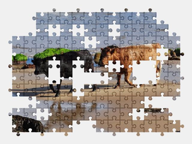 free jigsaw puzzle online cows,beach,sea,animal