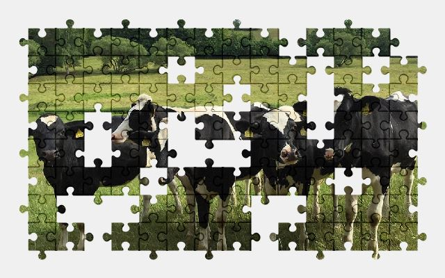 free jigsaw puzzle online cows,pasture,cow,nature,animal