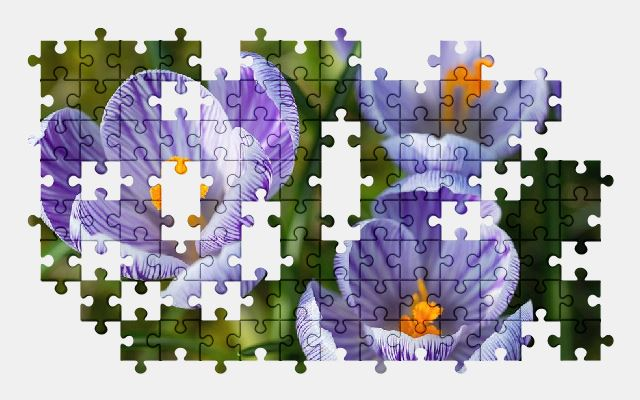 free jigsaw puzzle online crocus,blossom,bloom,spring,flower,nature
