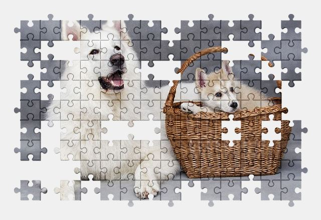 free jigsaw puzzle online cute,dog,animal,puppy,pet