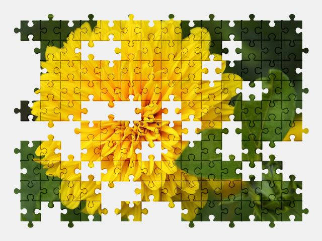 free jigsaw puzzle online dahlia,flower,yellow,nature,plant