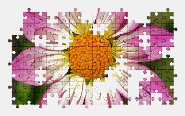 free jigsaw puzzle online dahlia,pink,flower,plant,blossom,bloom,nature