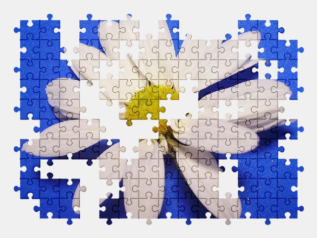 free jigsaw puzzle online daisy,nature,flower,plant