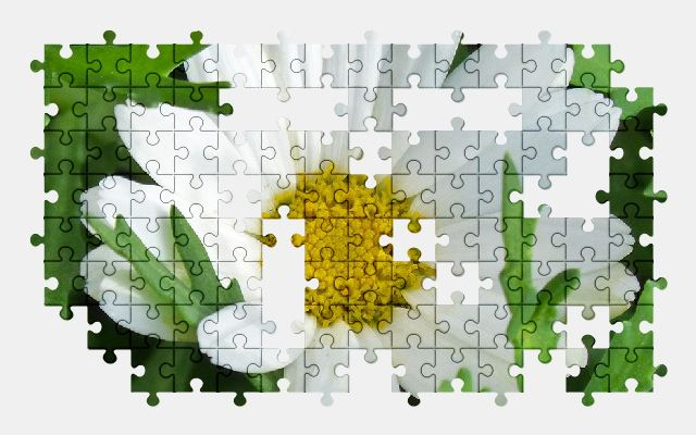 free jigsaw puzzle online daisy,flower,nature