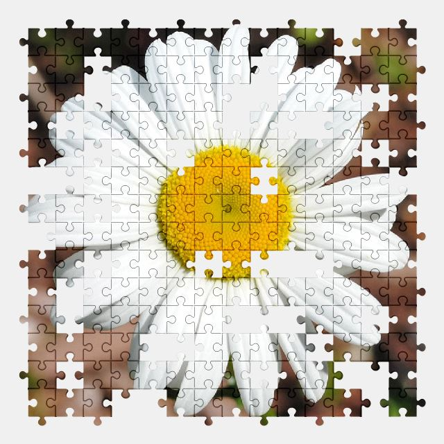 free jigsaw puzzle online daisy,flower,spring,nature,plant,white