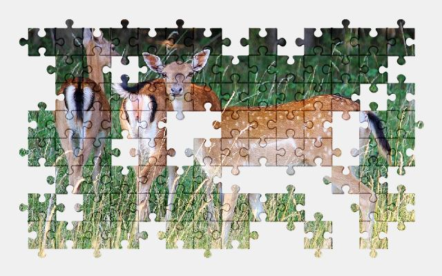 free jigsaw puzzle online deer,forest,nature,animal