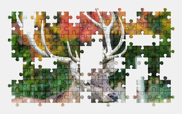 free jigsaw puzzle online deer,nature,animal