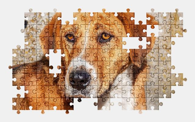 free jigsaw puzzle online dog,animal,cute