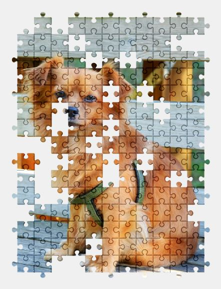 free jigsaw puzzle online dog,adorable,puppy,animal,pet