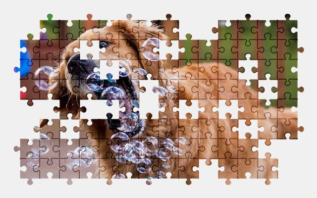free jigsaw puzzle online dog,bubble,play,funny,animal