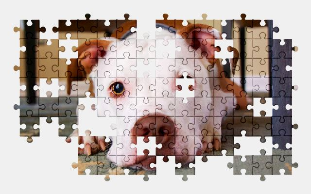 free jigsaw puzzle online dog,face,cute,animal