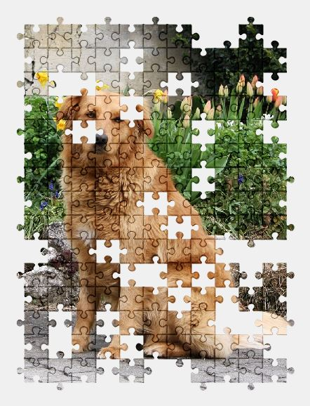 free jigsaw puzzle online dog,flowers,animal,pet