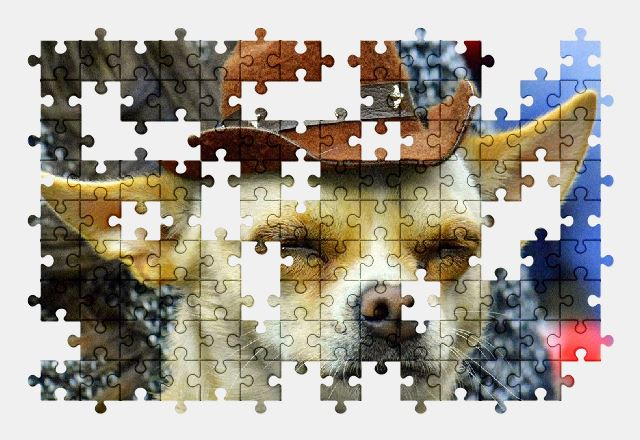 free jigsaw puzzle online dog,hat,adorable,funny,pet,animal