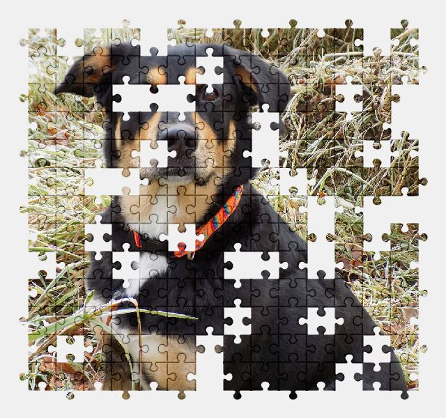free jigsaw puzzle online dog,pet,animal,adorable