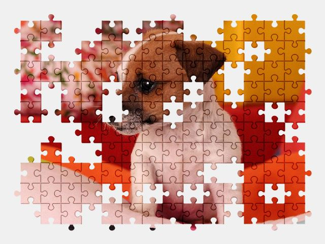 free jigsaw puzzle online dog,puppy,cute,animal