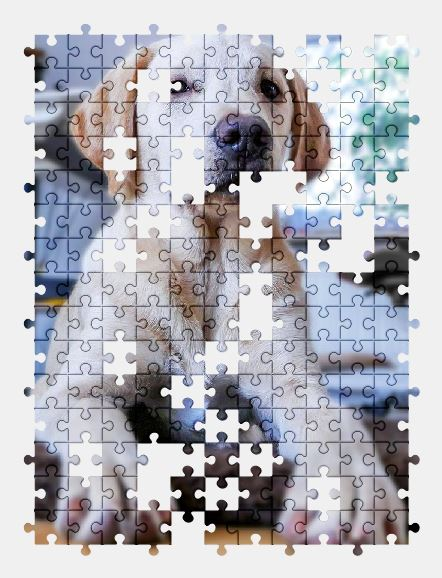 free jigsaw puzzle online dog,puppy,labrador,pet,animal