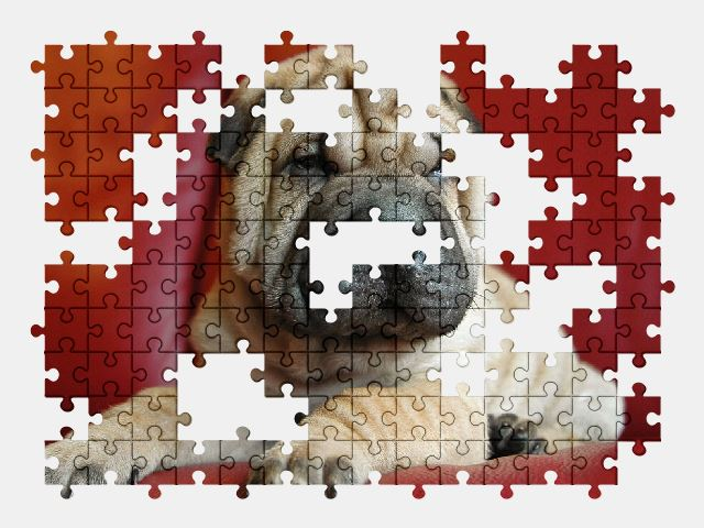 free jigsaw puzzle online dog,puppy,animal,pet