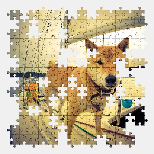 free jigsaw puzzle online dog,sailboat,boat,yacht,pet,sea