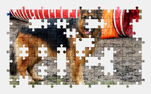 free jigsaw puzzle online animal,shepherd,dog,pet